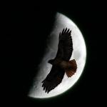 MoonHawk-
