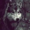 wolf-604